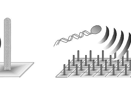 Champs de brindilles nanométriques