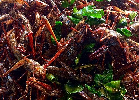 Plat d'insectes
