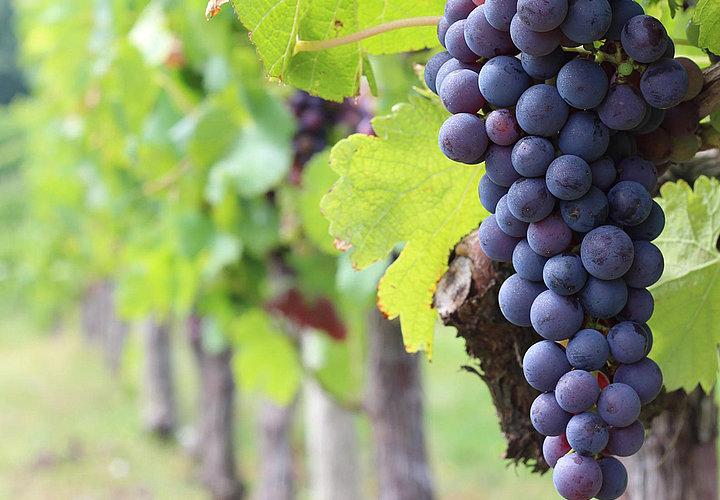 Master Wine and Hospitality Management